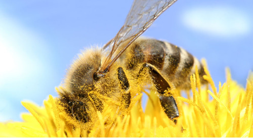 Get the buzz on pollination and a free student handout from McGraw Hill's AccessScience