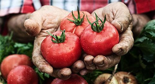 Construyendo una ventaja competitiva en alimentos