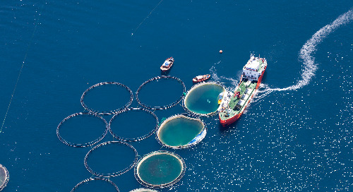 Sustainable Seafood – The Source of All Life on Earth?