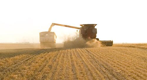 Ontario Grain and Oilseed Benchmarking Report 2020