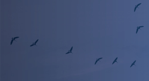 Flocking to the cloud: why you should migrate SAP to Azure