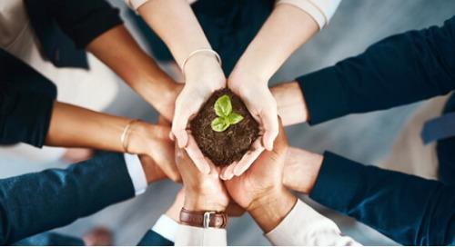 La sostenibilità in ufficio attrae i talenti