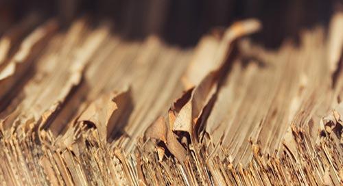 庆祝2020年国际档案周:赋予知识社会权力