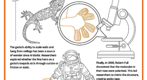 Curiosity in Research: An Illustrated History