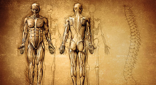 5 Ways to Use WileyPLUS in Your Anatomy and Physiology Course