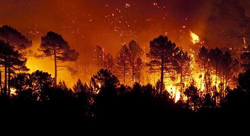 火灾与洪水:挑战学生,塑造消费未来