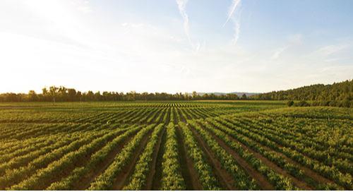 可持续农业采样器