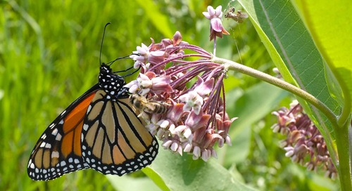 Pollinator Services