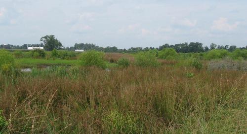 Project: York River Mitigation Bank