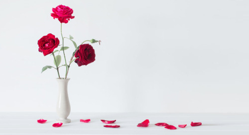 What do Business Intelligence & The Bachelor Have in Common?