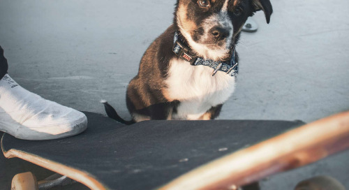 The 80/2 Rule: Or Why Dogs on Skateboards Matter to the Minneapolis Star Tribune