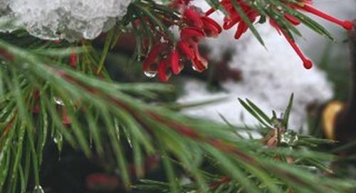 Four Seasons Breeze Dec. 2015