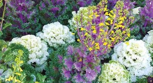 Four Seasons Hemet July 2016