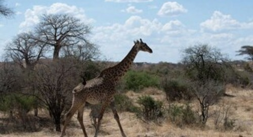 Safari destiantion Tanzania
