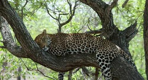 Safari destiantion South Africa
