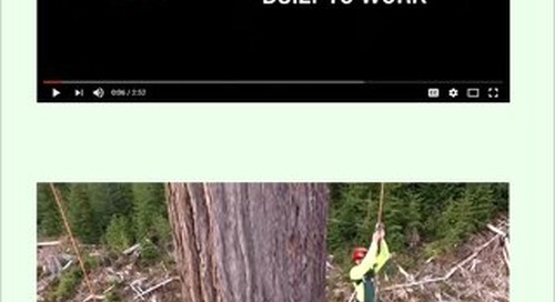 Timber & Forestry E News Issue 443