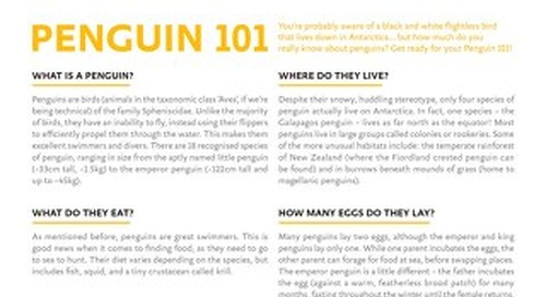 Penguins 101: Everything You Need To Know About Penguins