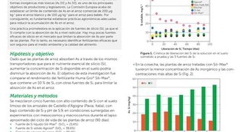 Sili-Max limita la absorción de  arsénico en el arroz, Research Report (HG)