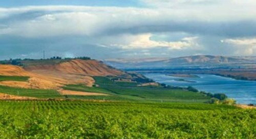 Signature Wines & Wineries of Washington PREVIEW