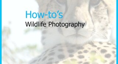 How tos Wildlife Photography