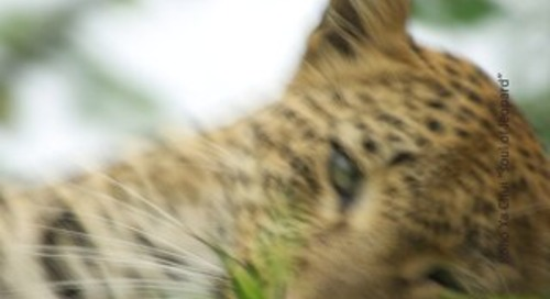 Leopard Land