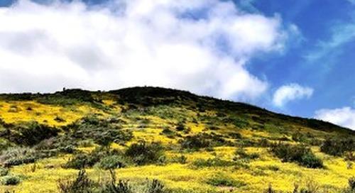 Solera Diamond Valley View May 2019