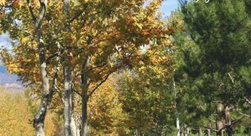 Four Seasons Breeze October 2019