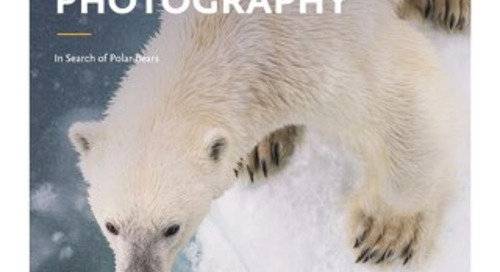 Spitsbergen Photography: In Search of Polar Bears