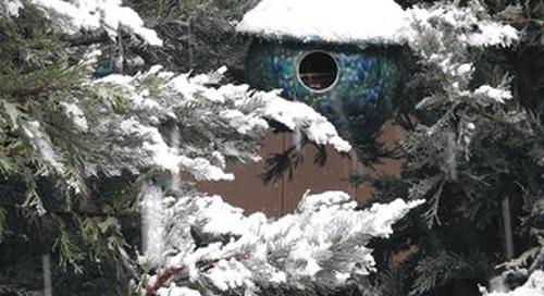 Four Seasons Breeze January 2020