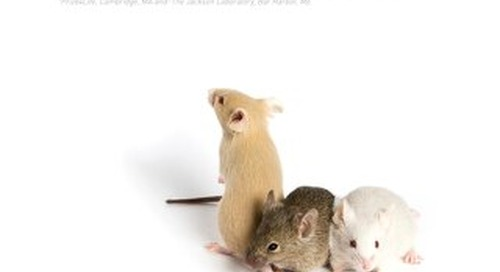 Working with ALS Mice: Guidelines for Preclinical Testing and Colony Management