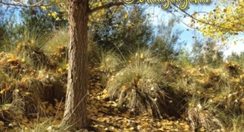 Four Seasons Breeze, October 2013