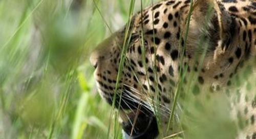 Travel & Safari Information