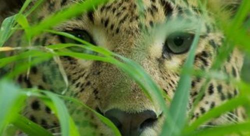 Wildlife Photography on African Safaris
