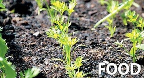 Focus 182 - Food Security: Time to focus on optimising our agriculture and food supply