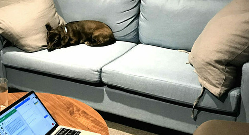 Meet the CrowdWoofers! CrowdRiff's Office Dogs