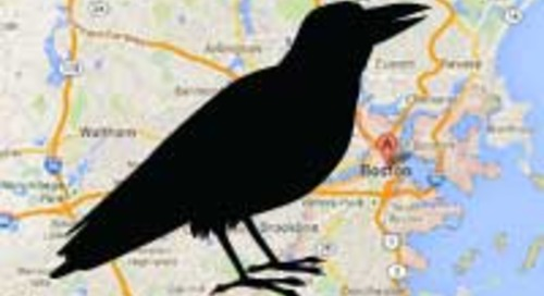 Researchers Use Big Data to Save Crows Around Boston