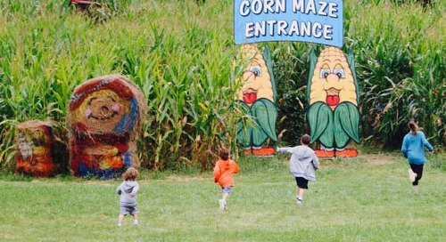 Five Corn Mazes in New Jersey to Visit this Fall