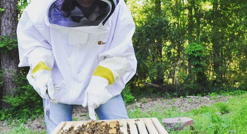 Be Like a Bee: 5 Lessons Beekeeping Can Teach us About Work