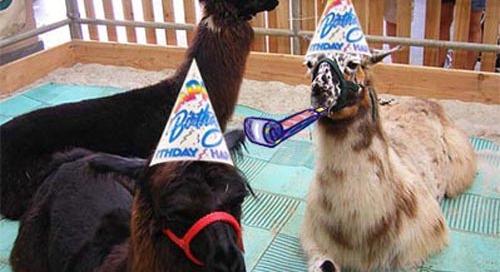 Happy 12th Birthday to Us!