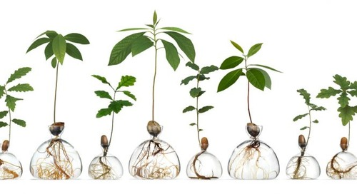 Ilex Studio's Glass Vases Let You Grown Your Own Trees