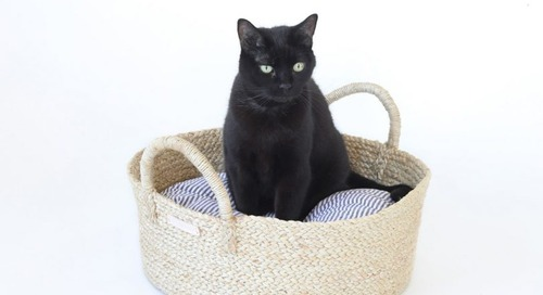 Basket Bed for Dogs and Cats From Faunamade