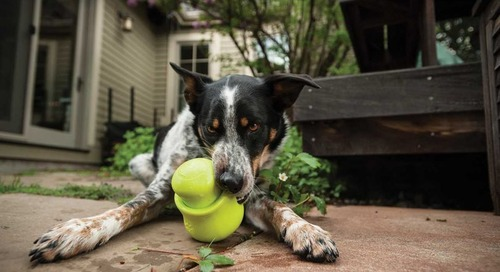 Keep Your Dog Occupied with Treat Toys From West Paw