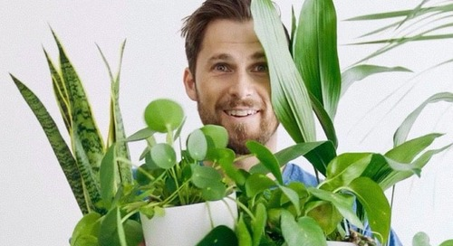 Patch Plants harvests insight from a bumper crop of business data