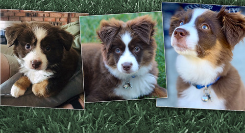 A Puppy Story and Why Workplace Communication Matters