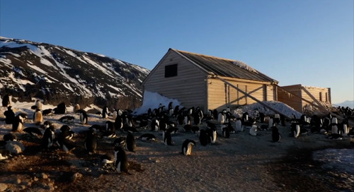 Surprises from the Past! Antarctic Heritage Trust's Unexpected Discovery in a Historic Polar Hut