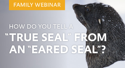 "Family Webinar: How do you tell a ""true seal"" from an ""eared seal""?"