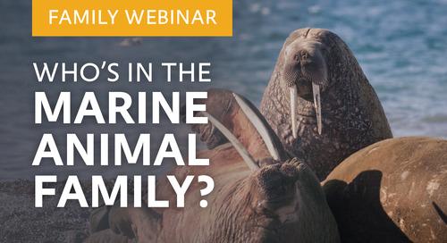 Family Webinar: Marine Animals