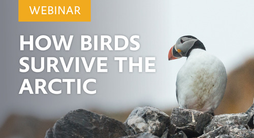 Webinar: How Birds Survive the Arctic
