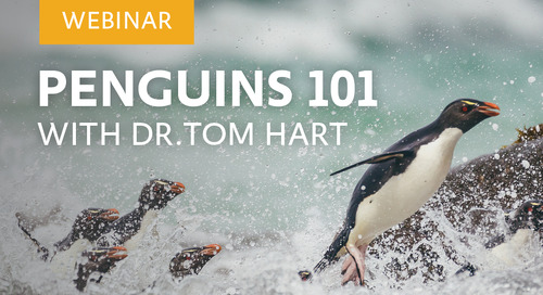 Webinar: Penguins 101