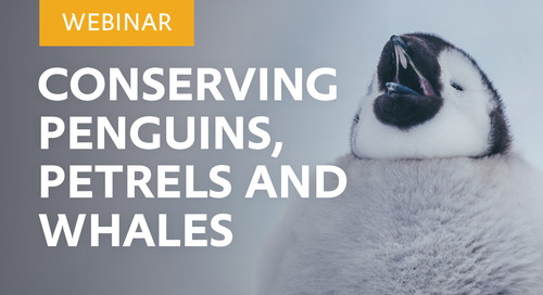 Webinar: Conservation of Whales, Penguins and Petrels